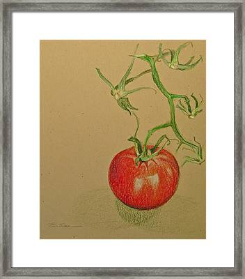 One Great Tomato Framed Print