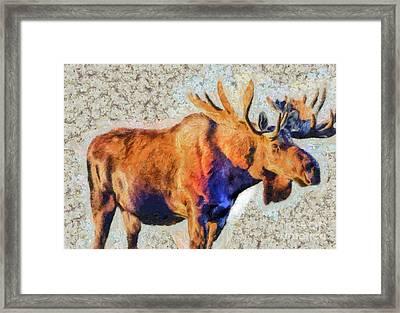 One Handsome Moose Framed Print