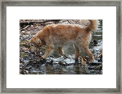 One Happy Doggy Framed Print