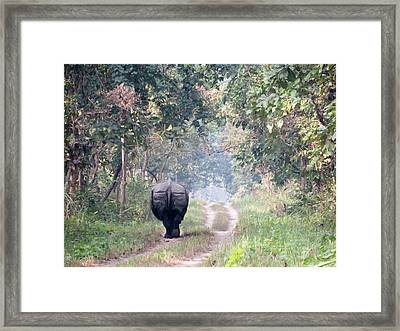 One Horned Rhino Walking Down The Road Framed Print