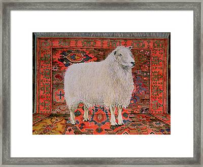 One Hundred Percent Wool Framed Print by Ditz