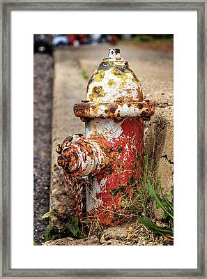 One Hydrant - Too Many Dogs Framed Print