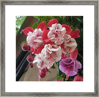 One In A Bunch Framed Print