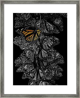 One In A Million Framed Print by Heather Ward