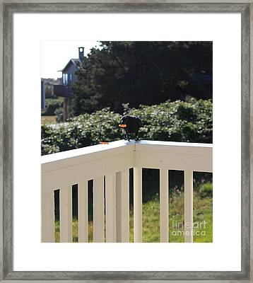 Framed Print featuring the photograph One In The Mouth Is Worth by Marie Neder