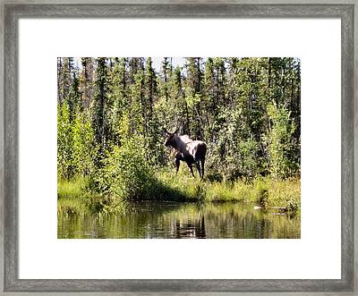 Framed Print featuring the photograph One Last Look by Adam Owen