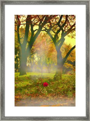 One Last One Framed Print