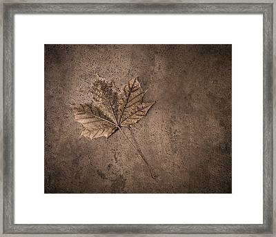 One Leaf December 1st  Framed Print by Scott Norris