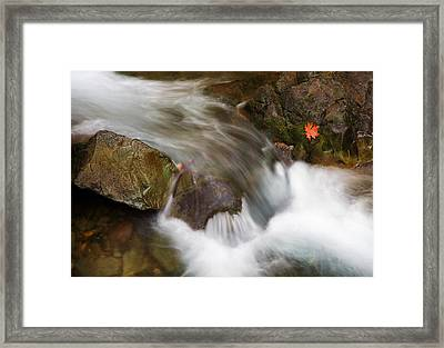 One Left Framed Print by Mike  Dawson