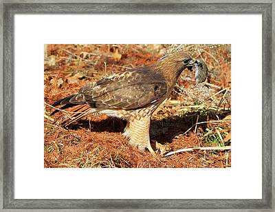 One Less Vole Framed Print