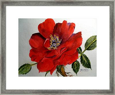 One Lone Wild Rose Framed Print