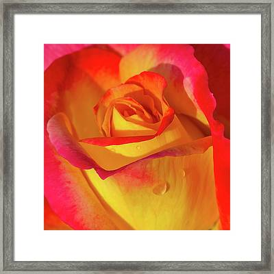 Framed Print featuring the photograph One Macro Rose by Julie Palencia