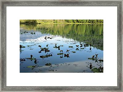 One Mile Lake Reflections 1 Framed Print by Walter Fahmy