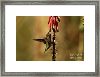 One Moment At Time Framed Print by Christiane Schulze Art And Photography