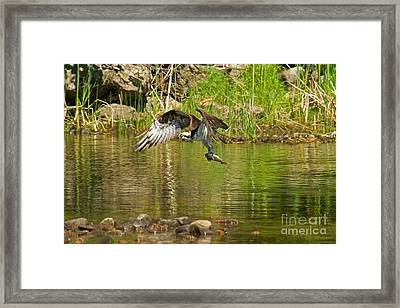 Framed Print featuring the photograph One More Fish by Alana Ranney