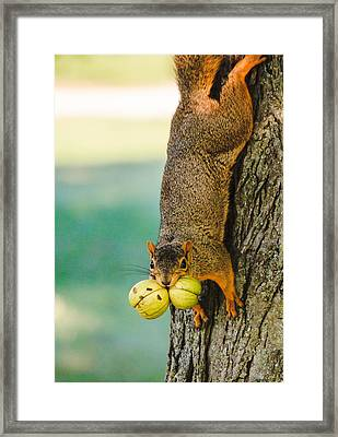 One Nut Is Never Enough Framed Print