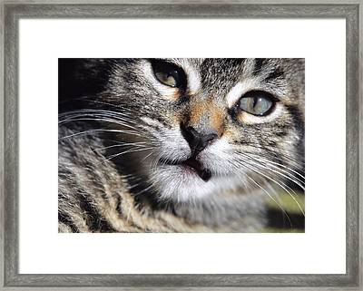 One Of Those Days Framed Print by JAMART Photography
