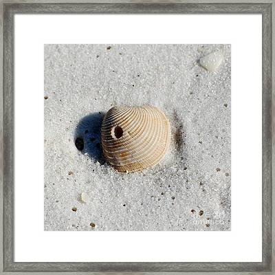 One Orange Striped Sea Shell With Hole Macro On Fine Wet Sand Square Format Framed Print by Shawn O'Brien