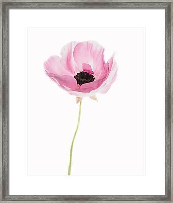 One Pink Beauty Framed Print by Rebecca Cozart