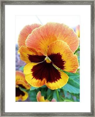 One Pretty Face Framed Print by Jeanette Oberholtzer