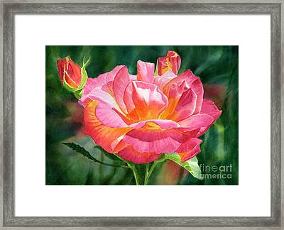 One Red And Gold Rose Blossom Dark Background Framed Print by Sharon Freeman