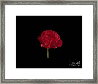 One Red Flower Tee Shirt Framed Print