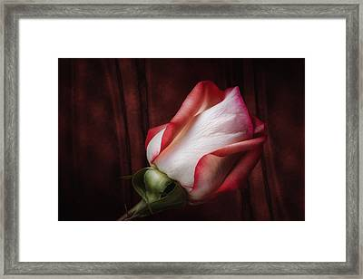 One Red Rose Still Life Framed Print by Tom Mc Nemar