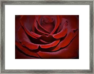 One Red Rose Framed Print by Svetlana Sewell