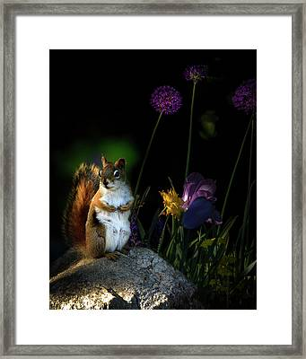One Red Squirrel  Framed Print by Bob Orsillo