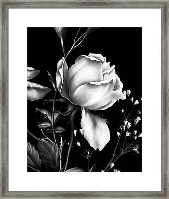 One Rose Bloom Black And White Framed Print by Georgiana Romanovna