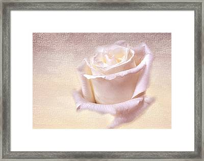 One Rose Is Enough For The Dawn Framed Print