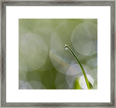 One Singular Sensation Framed Print
