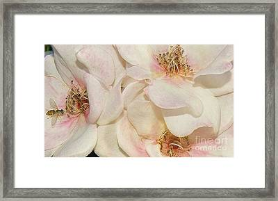 One Small Visitor Framed Print by Reb Frost