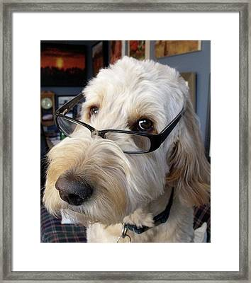 One Smart Doodle Framed Print by Diane Daigle