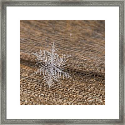 Framed Print featuring the photograph One Snowflake by Ana V Ramirez