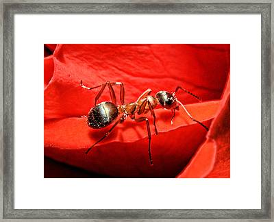 One Soldier Framed Print by Lawrence Christopher