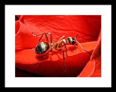 Ant Framed Prints