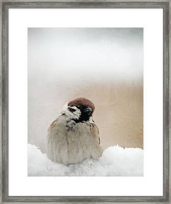 One Sparrow In Snow Framed Print