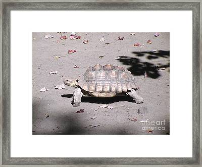 One Step At A Time Framed Print by Daniel Henning
