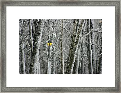 Framed Print featuring the photograph One Strange Tree 1 by David Dunham