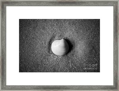 One Striped Pastel Sea Shell Macro On Fine Wet Sand Black And White Framed Print