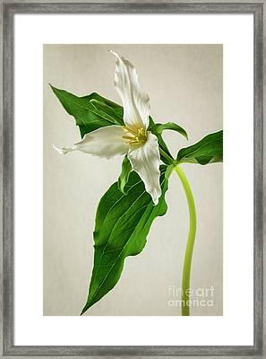 One Trillium Framed Print by Masako Metz