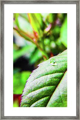 One Waterdrop Framed Print by Cesar Vieira