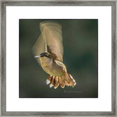 One_wing Framed Print