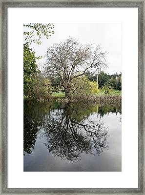 Tree Reflections Framed Print by Marilyn Wilson