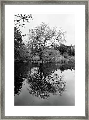 Tree Reflections - Bw Framed Print by Marilyn Wilson