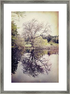 Tree Reflections - Textured Framed Print by Marilyn Wilson