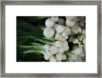 Onion 2 Framed Print