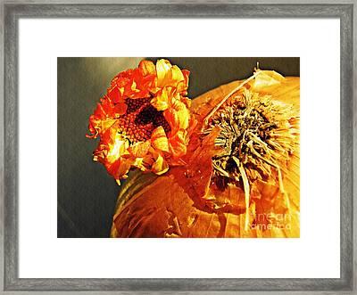 Onion And His Daisy Framed Print by Sarah Loft