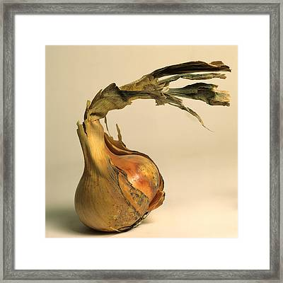 Onion Framed Print by Bernard Jaubert